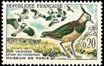 Vanneaux - Étude des migrations - Muséum de Paris