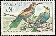 Guêpiers - Camargue - Protection de la nature