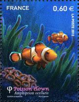 Poisson clown amphiprion ocellaris